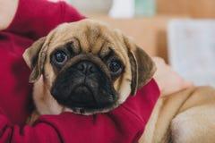 Άποψη κινηματογραφήσεων σε πρώτο πλάνο του παιχνιδιού γυναικών με το χαριτωμένο σκυλί μαλαγμένου πηλού στοκ εικόνες