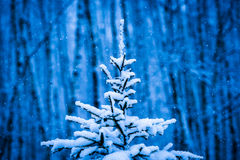 Άποψη κινηματογραφήσεων σε πρώτο πλάνο ενός χιονισμένου χριστουγεννιάτικου δέντρου Στοκ Εικόνες