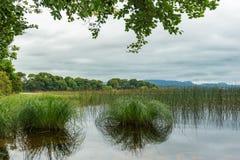 Άποψη κινηματογραφήσεων σε πρώτο πλάνο μιας ιρλανδικής λίμνης Στοκ εικόνες με δικαίωμα ελεύθερης χρήσης