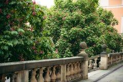 Άποψη κινηματογραφήσεων σε πρώτο πλάνο των ανθίζοντας θάμνων με τα ρόδινα λουλούδια πίσω από τον παλαιό φράκτη Στοκ Φωτογραφία
