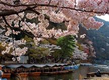 Άποψη κινηματογραφήσεων σε πρώτο πλάνο των ανθών κερασιών λουλουδιών Sakura από Katsura River Στοκ Εικόνες