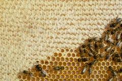 Άποψη κινηματογραφήσεων σε πρώτο πλάνο των μελισσών εργασίας στην κηρήθρα Κηρήθρα με το υπόβαθρο μελισσών Σχέδιο κυττάρων μελιού  Στοκ Εικόνες