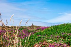Άποψη λουλουδιών σε Wheal Coates στοκ φωτογραφίες με δικαίωμα ελεύθερης χρήσης