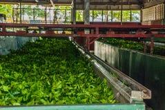 Άποψη μέσα σε ένα εργοστάσιο όπου τα φύλλα τσαγιού ξεραίνουν μέσα Sabah, Μπόρνεο, Μαλαισία Στοκ εικόνα με δικαίωμα ελεύθερης χρήσης