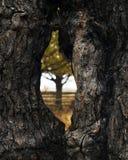 Άποψη μέσω μιας τρύπας σε ένα δέντρο στοκ φωτογραφία