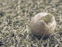Άποψη μέσω σπασμένο eggshell στο χαλασμένο λέκιθο Τα πουλιά ρίχνουν κάτω από το κρύο αυγό Στοκ Εικόνα