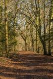 Άποψη μέσω του δάσους άνοιξη στοκ εικόνες με δικαίωμα ελεύθερης χρήσης