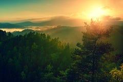 Άποψη μέσω των κλάδων στη βαθιά misty κοιλάδα μέσα στη χαραυγή Ομιχλώδες και misty πρωί φθινοπώρου στο λοφώδες σημείο άποψης Στοκ Φωτογραφίες