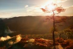 Άποψη μέσω των κλάδων στη βαθιά misty κοιλάδα μέσα στη χαραυγή Ομιχλώδες και misty πρωί στο σημείο άποψης ψαμμίτη στη δασική ισοτ Στοκ Φωτογραφία