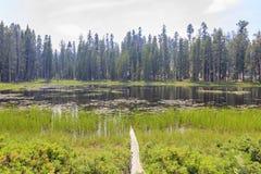 Άποψη μεσημεριού μιας μικρής λίμνης με τα δέντρα κοντά στο δρόμο Tioga Στοκ Φωτογραφίες