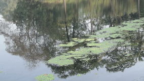 Άποψη μιας συμπαθητικής λίμνης απόθεμα βίντεο