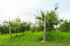 Άποψη οπωρώνων της Apple με τα fruity δέντρα έξω Στοκ φωτογραφία με δικαίωμα ελεύθερης χρήσης