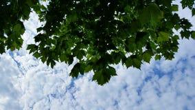 Άποψη ουρανού φύλλων Στοκ φωτογραφία με δικαίωμα ελεύθερης χρήσης