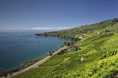 Άποψη πέρα από τη λίμνη Γενεύη από τις αμπέλους Lavaux Στοκ εικόνες με δικαίωμα ελεύθερης χρήσης