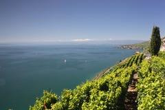 Άποψη πέρα από τη λίμνη Γενεύη από τις αμπέλους Lavaux Στοκ Φωτογραφία