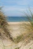 Άποψη πέρα από τη θάλασσα τους αμμόλοφους που καλύπτονται από στη χλόη lyme στοκ εικόνα