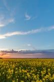 Άποψη πέρα από τον τομέα συναπόσπορων με τις κίτρινες ανθίσεις με το σύννεφο θύελλας Στοκ εικόνες με δικαίωμα ελεύθερης χρήσης
