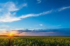 Άποψη πέρα από τον τομέα συναπόσπορων με τις κίτρινες ανθίσεις στο σύννεφο ηλιοβασιλέματος και θύελλας Στοκ φωτογραφίες με δικαίωμα ελεύθερης χρήσης