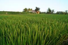 Άποψη πέρα από τους ορυζώνες ρυζιού στοκ φωτογραφία