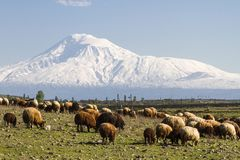 Άποψη πέρα από το υποστήριγμα Ararat από την Αρμενία Στοκ Εικόνα