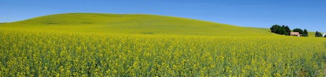 Άποψη πανοράματος, κίτρινος τομέας λουλουδιών χωρών Στοκ φωτογραφίες με δικαίωμα ελεύθερης χρήσης