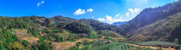 Άποψη πανοράματος του όμορφου αγροκτήματος τσαγιού σε έναν λόφο βουνών στο απόγευμα σε Angkhang Στοκ φωτογραφίες με δικαίωμα ελεύθερης χρήσης