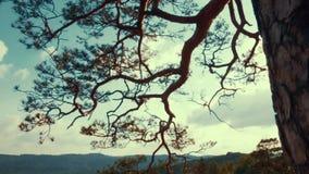 Άποψη περιστροφής γύρω από το παλαιό υψηλό δρύινο δέντρο στην κορυφή του βράχου βουνών προς το φωτεινό ηλιοβασίλεμα Εξωτερικός πυ φιλμ μικρού μήκους