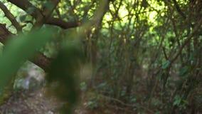 Άποψη περπατώντας μέσω των αλσυλλίων του τροπικού δασικού πράσινου φυλλώματος και των κλάδων των τροπικών δέντρων στις άγρια περι απόθεμα βίντεο