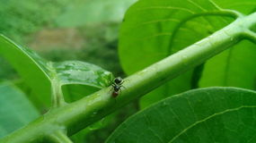 Άποψη πρακτικού του μυρμηγκιού μόνο Στοκ φωτογραφίες με δικαίωμα ελεύθερης χρήσης