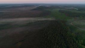 Άποψη πρωινού το δάσος και οι τομείς απόθεμα βίντεο