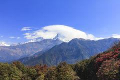 Άποψη σειράς βουνών Annapurna και Rhododendron, λουλούδι του Νεπάλ, δάσος στο Νεπάλ Στοκ εικόνα με δικαίωμα ελεύθερης χρήσης