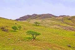 Άποψη σε έναν λόφο και ένα πρόβατο στο εθνικό πάρκο Snowdonia Στοκ φωτογραφία με δικαίωμα ελεύθερης χρήσης