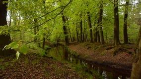 Άποψη σε ένα πράσινο δάσος με έναν κολπίσκο φιλμ μικρού μήκους