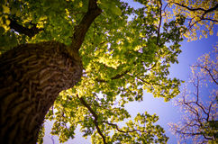 Άποψη σε μια κορώνα δέντρων από κάτω από Στοκ φωτογραφία με δικαίωμα ελεύθερης χρήσης