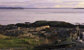 Άποψη σημείου βοοειδών του νησιού του San Juan Στοκ εικόνες με δικαίωμα ελεύθερης χρήσης