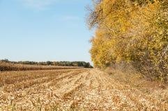 Άποψη στεγνωμένο cornfield στοκ εικόνες