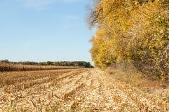 Άποψη στεγνωμένο cornfield στοκ εικόνες με δικαίωμα ελεύθερης χρήσης