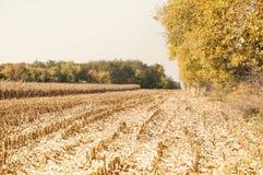 Άποψη στεγνωμένο cornfield στοκ φωτογραφία με δικαίωμα ελεύθερης χρήσης