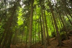 Άποψη στο δάσος στοκ φωτογραφίες με δικαίωμα ελεύθερης χρήσης