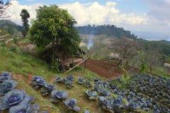 Άποψη στο βασιλικό γεωργικό σταθμό ANG Khang Doi στην επαρχία Chiang Mai, Ταϊλάνδη Στοκ Φωτογραφία