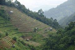 Άποψη στο βασιλικό γεωργικό σταθμό ANG Khang Doi στην επαρχία Chiang Mai, Ταϊλάνδη Στοκ Εικόνα