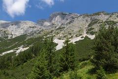 Άποψη στο επικεφαλής βουνό σκυλιών alpes λιβάδι Tirol βουνών της Αυστρίας Στοκ Εικόνα