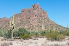 Άποψη σχετικά με ένα βουνό στην έρημο της Αριζόνα με τον κάκτο στοκ εικόνες