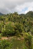 Άποψη σχετικά με εθνικό park alejandro de humboldt με τον ποταμό Κούβα στοκ φωτογραφία
