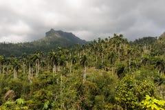 Άποψη σχετικά με τη ζούγκλα με τους φοίνικες εθνικό park alejandro de humboldt κοντά στο baracoa Κούβα στοκ φωτογραφίες