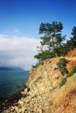 Άποψη σχετικά με τον κόλπο θάλασσας Πεύκο-δέντρα και θάλασσα ηλικίας φωτογραφία Στοκ φωτογραφία με δικαίωμα ελεύθερης χρήσης