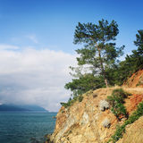 Άποψη σχετικά με τον κόλπο θάλασσας Πεύκο-δέντρα και θάλασσα ηλικίας φωτογραφία Στοκ εικόνα με δικαίωμα ελεύθερης χρήσης