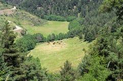 Άποψη σχετικά με το λιβάδι των αγελάδων στα βουνά Στοκ Εικόνες