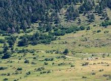 Άποψη σχετικά με το λιβάδι των αγελάδων στα βουνά Στοκ Φωτογραφία