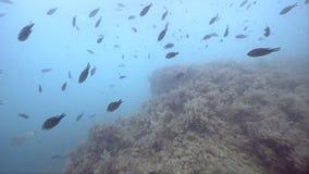 Άποψη σχετικά με το σχολείο των ψαριών και των σκοπέλων σε Μαύρη Θάλασσα απόθεμα βίντεο